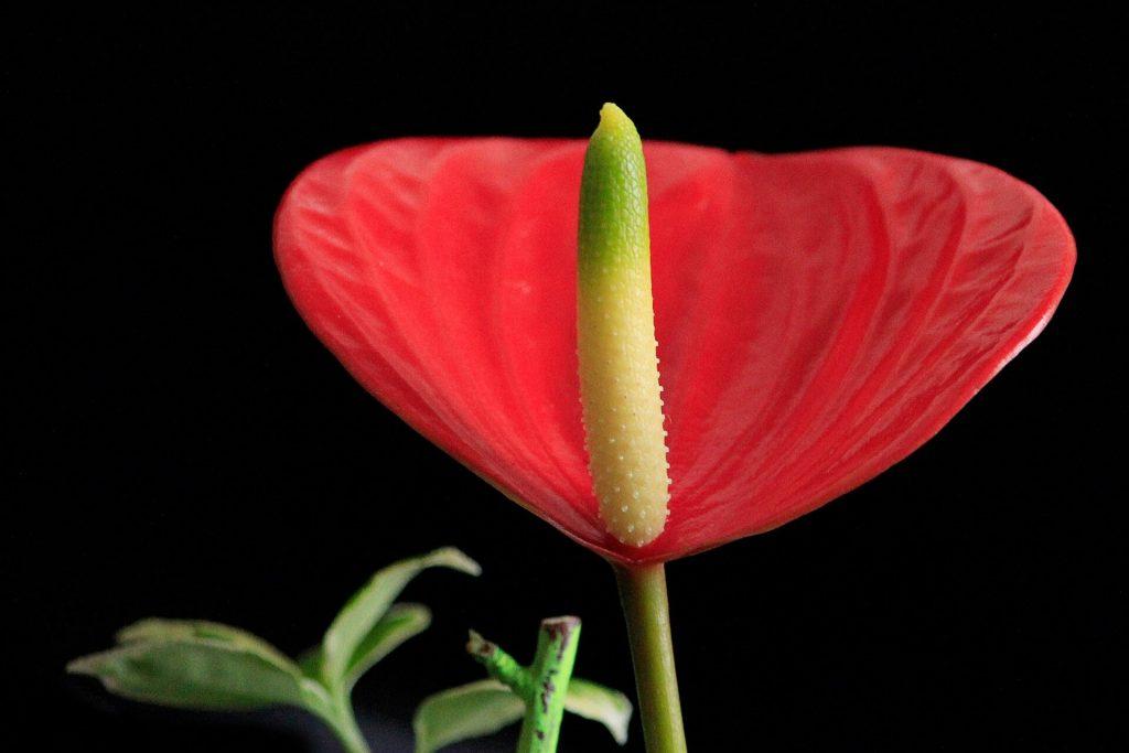 おっきなモノを咥え充血した花びらは性器みたい!