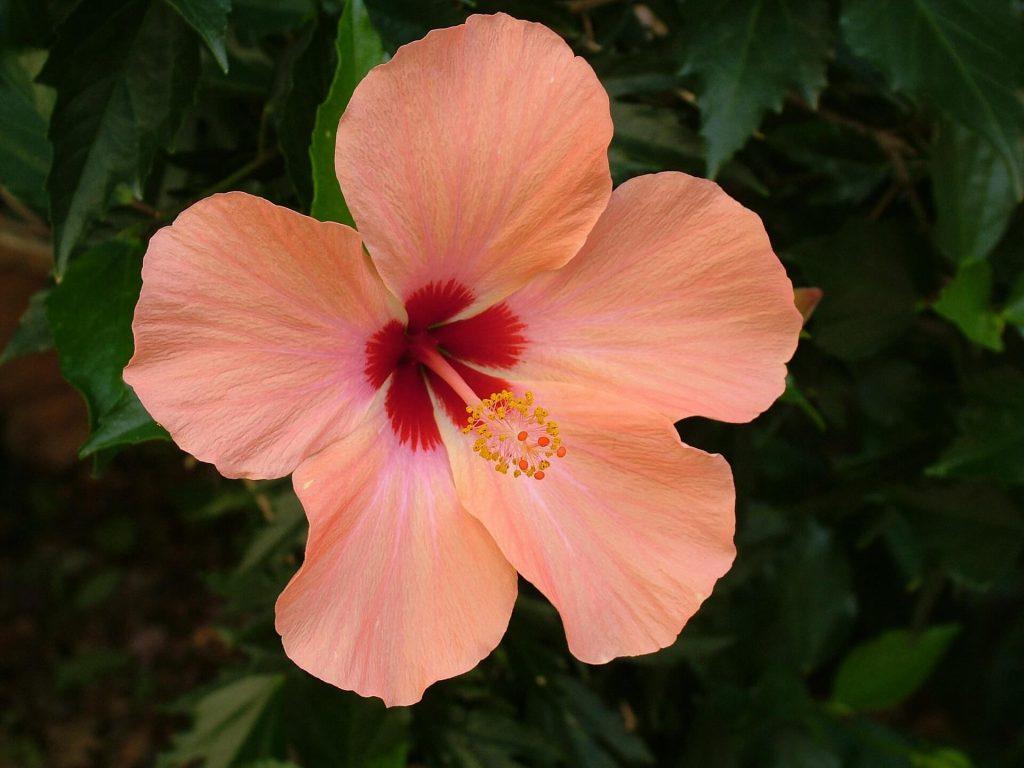 キレイなピンクの花びらは性器みたい!