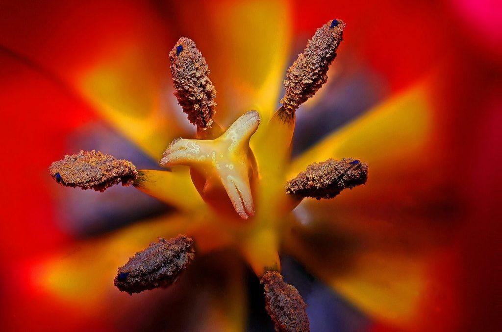 完熟のヌメヌメした花びらは性器みたい!