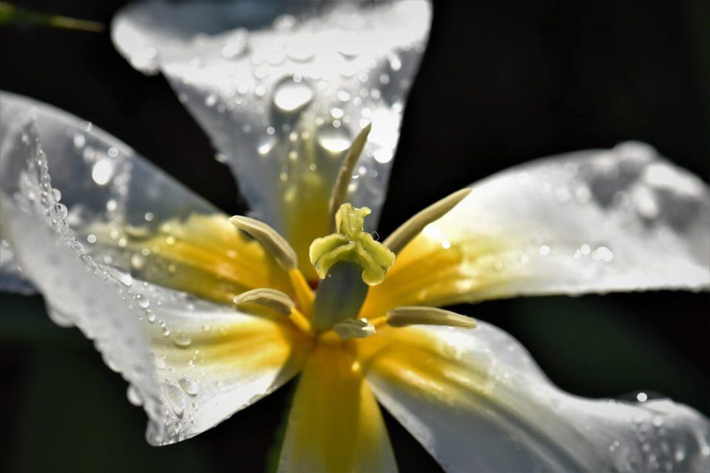 初々しい濡れて湿った花びらは性器みたい!